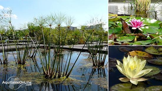 Jardin botanique de bordeaux nature et environnement for Jardin botanique bordeaux